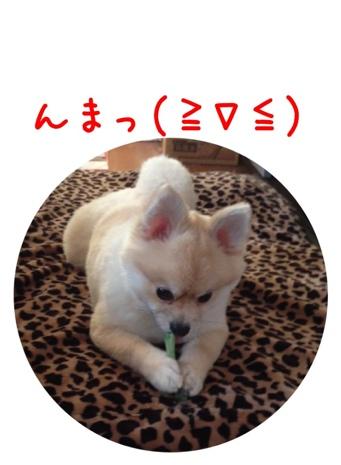 fc2blog_2013041607435397d.jpg