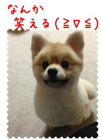fc2blog_20130416074504e6b.jpg