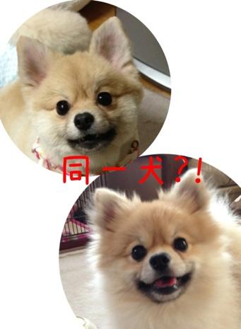 fc2blog_20130416074833929.jpg