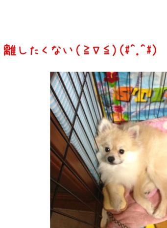 fc2blog_20130418182603dd1.jpg