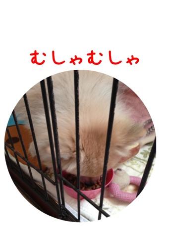 fc2blog_20130422160556ef1.jpg