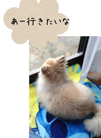 fc2blog_2013042415352993e.jpg