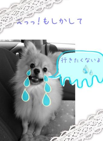 fc2blog_201305071230179c1.jpg