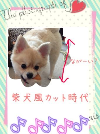 fc2blog_201305081548509cc.jpg