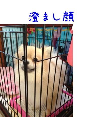 fc2blog_20130517153811ca1.jpg