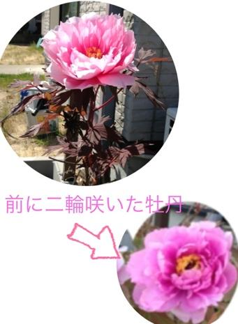 fc2blog_201305171543453e8.jpg