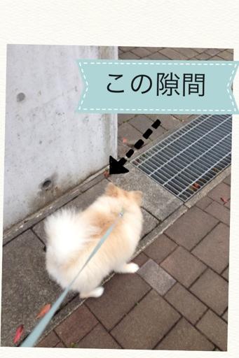 fc2blog_20130705165201439.jpg
