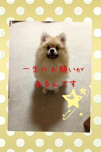 fc2blog_20130730144146a6d.jpg