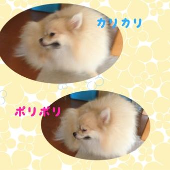 fc2blog_2013091016332680d.jpg