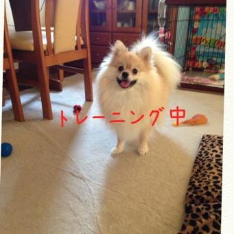 fc2blog_20130911200851394.jpg