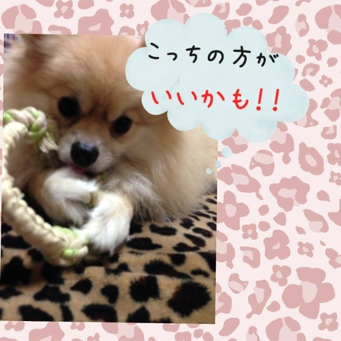 fc2blog_20130912224607983.jpg