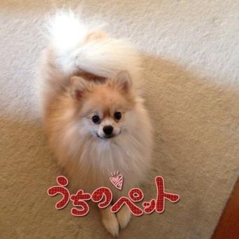 fc2blog_20130922135550622.jpg