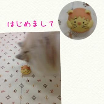 fc2blog_201309262148556df.jpg