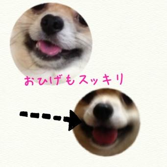fc2blog_201309302033234c5.jpg