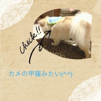 fc2blog_20131102211421121.jpg
