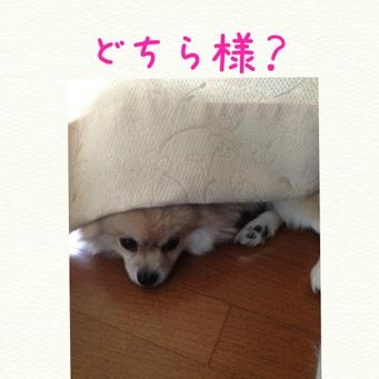 fc2blog_20131108172247398.jpg