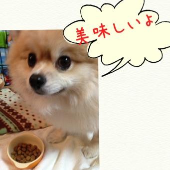 fc2blog_201311111827062e6.jpg
