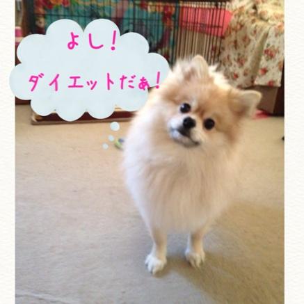 fc2blog_20141116221459524.jpg