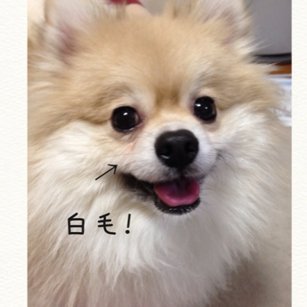 fc2blog_201411192247007b7.jpg