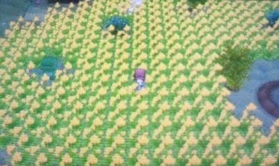pokemonxy098.jpg