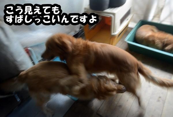 DSC_8717_20131003224739fcf.jpg