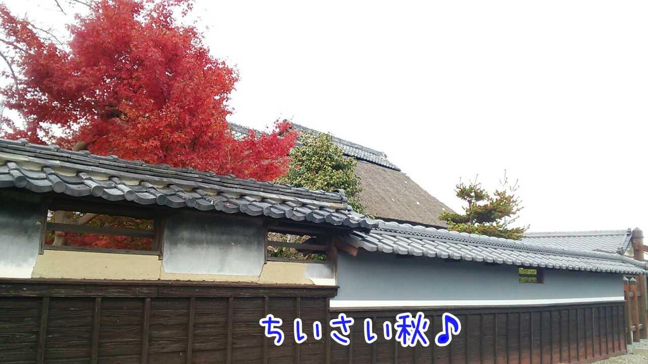 20141124204811405.jpg