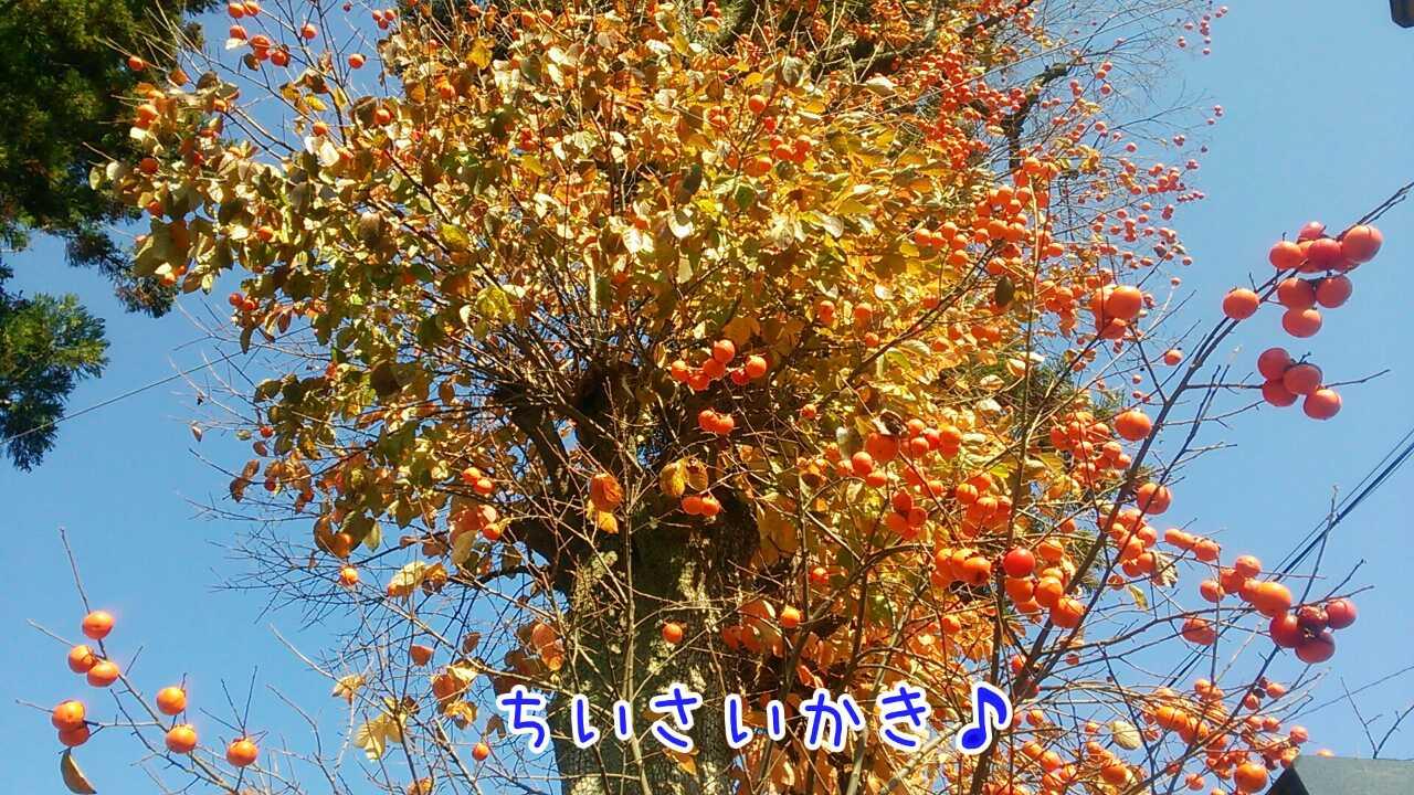 20141124210252111.jpg