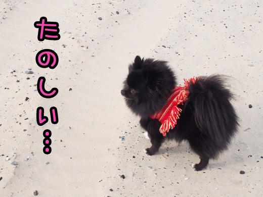 shikanosima06.jpg