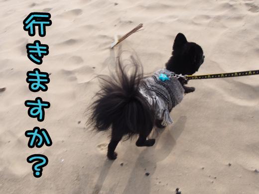 shikanosima07.jpg