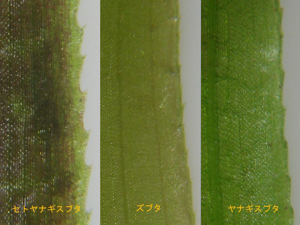 leafComp1014.jpg