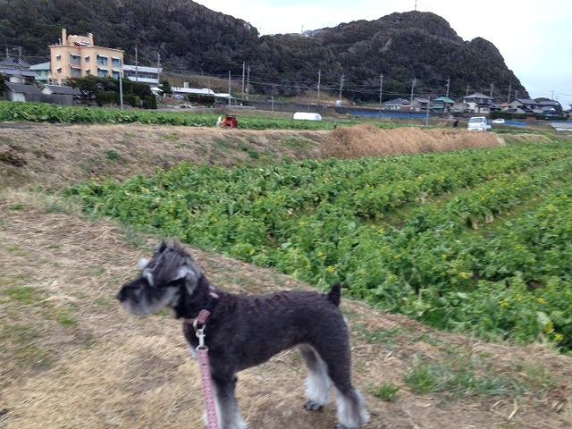 カナちゃんとお散歩1