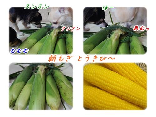 201308301914446c8.jpg