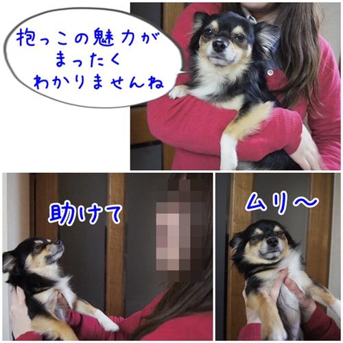 201311160150079d8.jpg