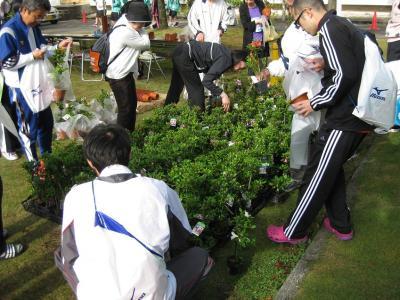 2013年鯖江つつじ 004