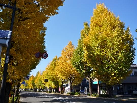 13_11_16-04miyagase.jpg