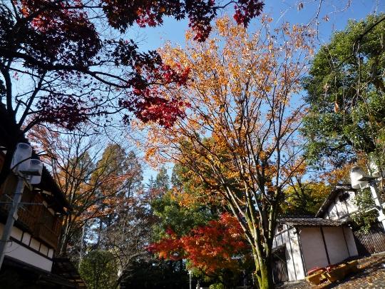 14_11_27-03jindaiji.jpg