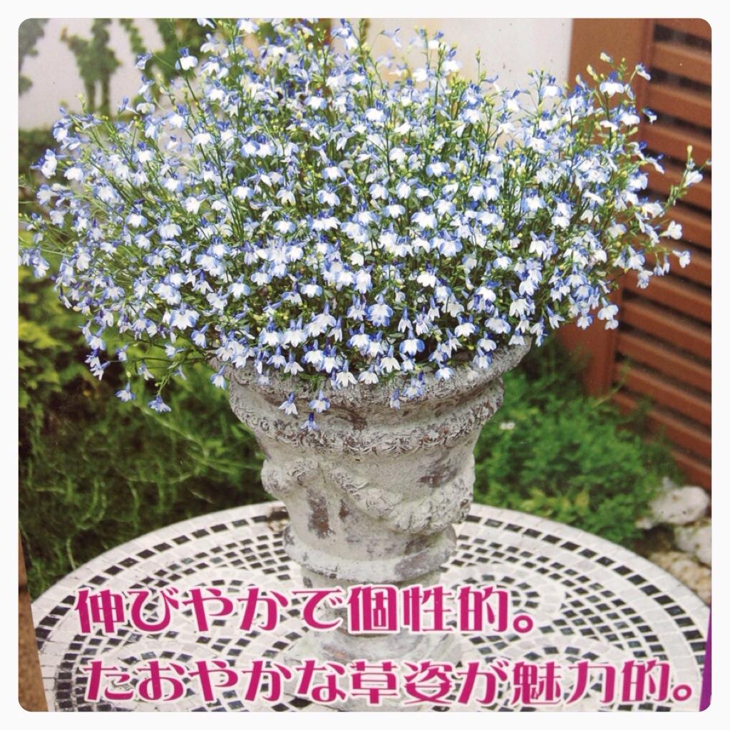 IMG_0032_20130417144027.jpg