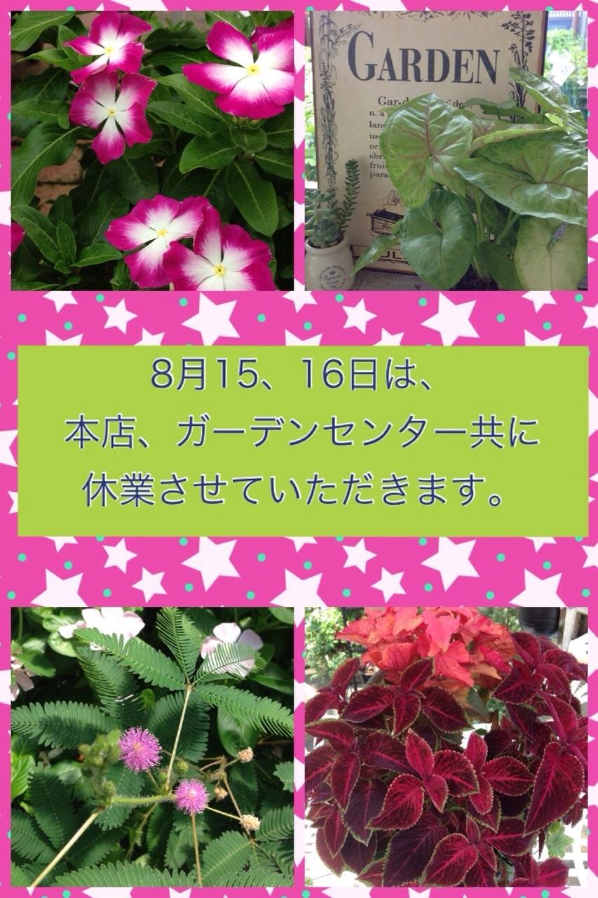 image_20130815202511ac6.jpg