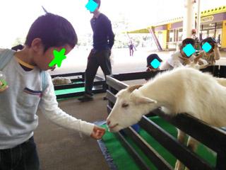 snap_tanosiiikuji962_201341173842.jpg