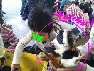 snap_tanosiiikuji962_201341174457.jpg