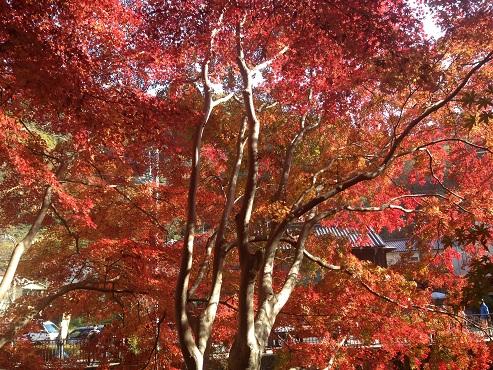fumotoya016.jpg