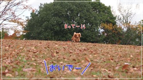 紅葉キター2