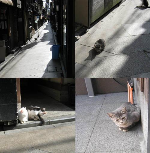 猫ー先斗町