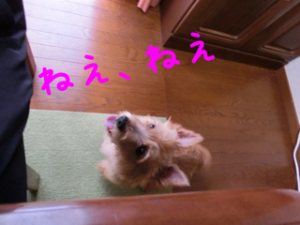 20130619080512973.png