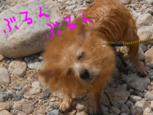 201307071344083ce.png