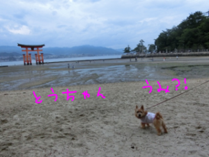 20130716094439c7a.png