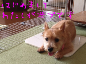 20130727231031f19.png