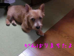 201307272310332a6.png