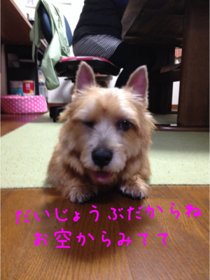 2013111219440698c.png