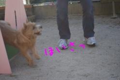 fc2blog_2013101221292099c.jpg